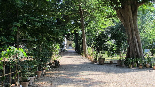 Il giardino dei semplici storia dell 39 orto botanico di - Il giardino dei semplici ...