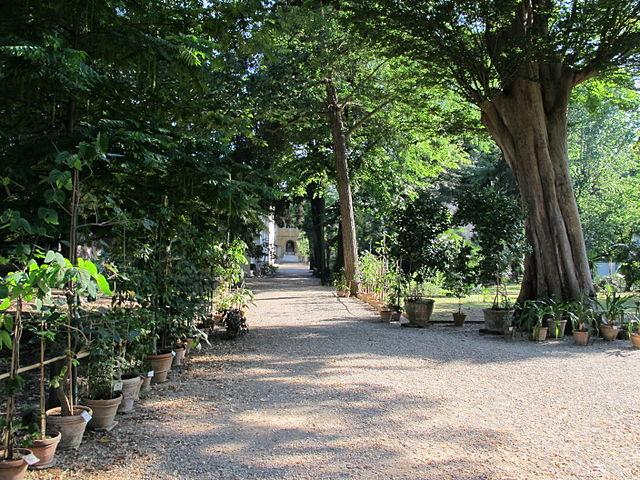 Il giardino dei semplici storia dell 39 orto botanico di for Giardino orto botanico firenze