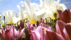 primavera, toc toc firenze