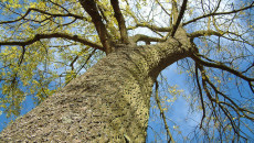 Treedom, toc toc firenze