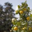 Varietà e bellezza al giardino delle Rose, Toc Toc Firenze